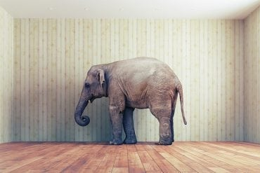 The elephant called exit - image for article by Greg Alder